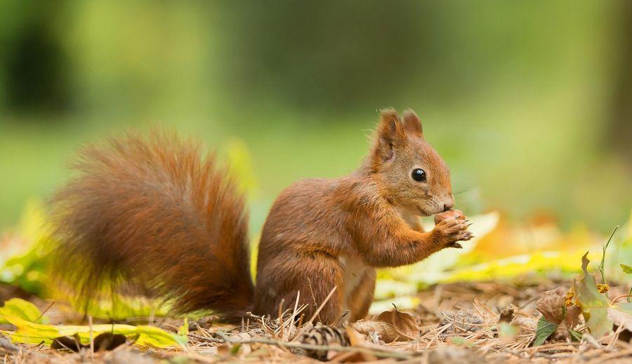 Fressen eichhörnchen vögel