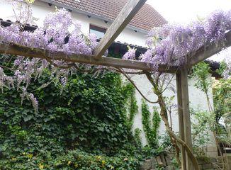 ökotipps Garten