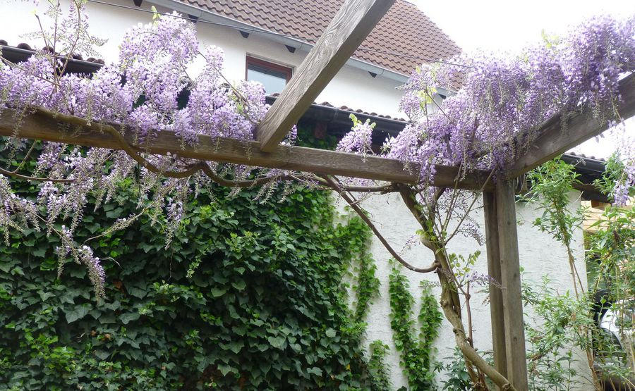 Bio Pflanzen Fur Balkon Und Garten Bund Naturschutz