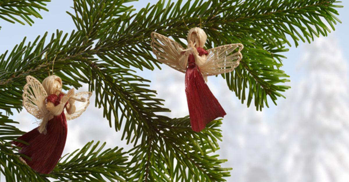 Weihnachtsbaum Selber Schneiden.Bund Naturschutz Empfiehlt öko Christbäume Bund Naturschutz In