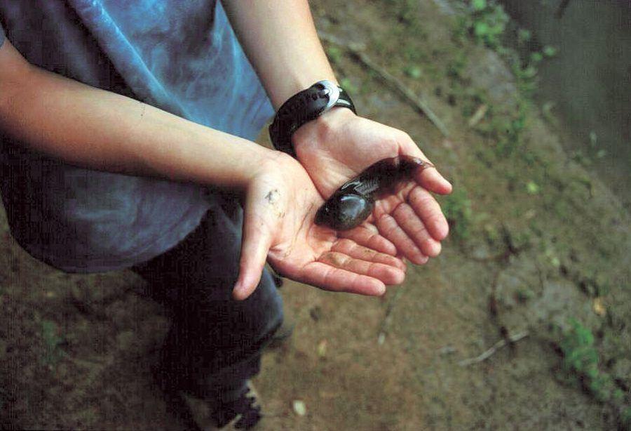 Unterrichtsmaterial Amphibien   BUND Naturschutz