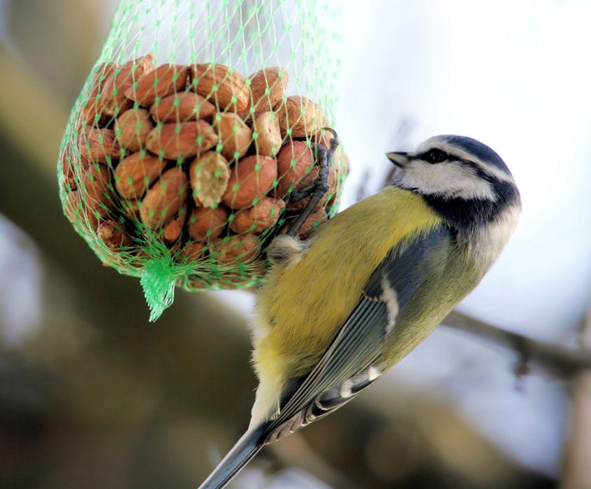 Arbeitsblatt Vögel Füttern Im Winter : Vögel füttern im winter bund naturschutz in bayern e v
