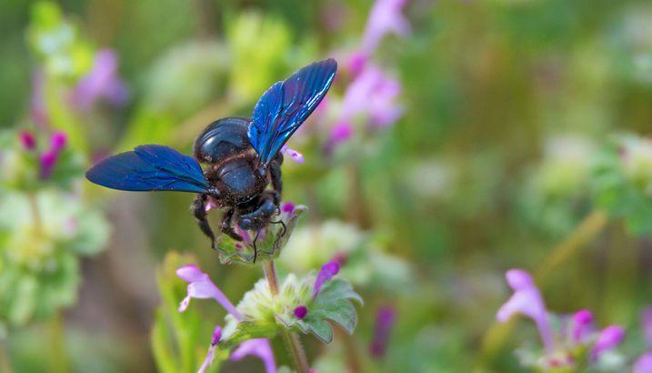Wildbienen In Bayern Bund Naturschutz