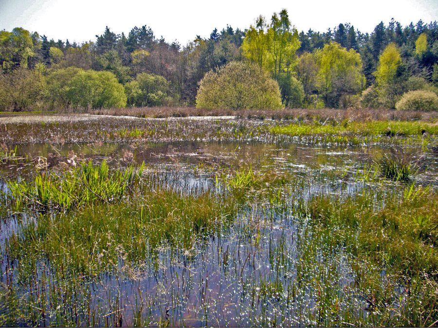 Lebensraum Von Libellen Bund Naturschutz